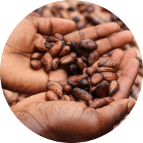 cocoa_beans_home-1